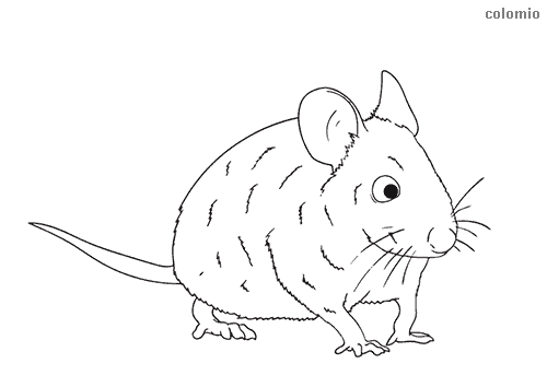Curious mouse coloring sheet