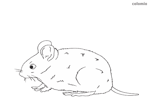 Little mouse coloring page