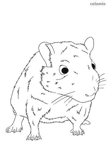 Realistic mouse coloring page