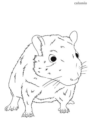 Dibujo de Ratón blanco para colorear