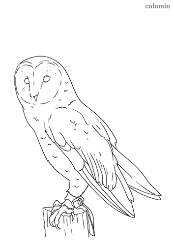 Barn owl coloring sheet