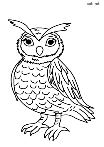 Easy long-eared owl coloring page