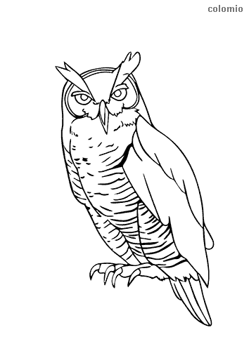 Easy owl coloring sheet