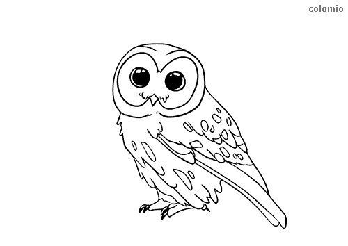 Owl baby coloring page