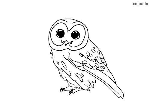 Dibujo de Cría de búho para colorear