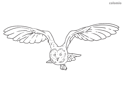 Owl in flight coloring page