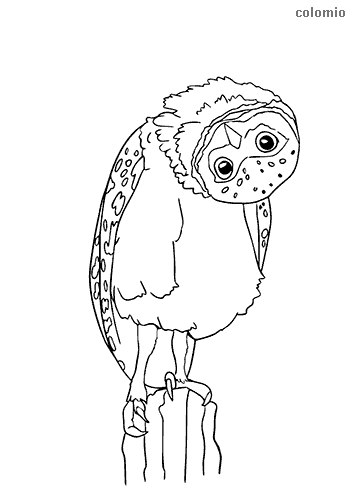 Owl with twisted head coloring page