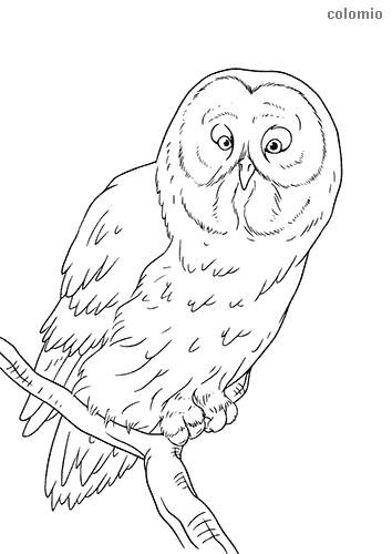 Dibujo de Búho sobre una rama para colorear