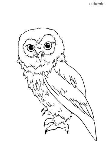Short-eared owl coloring page