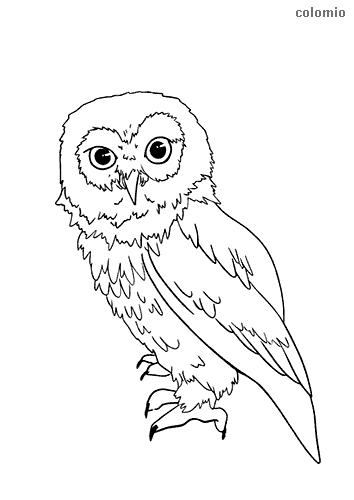 Dibujo de Búho de orejas cortas para colorear