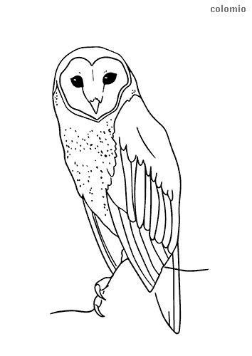Simple barn owl coloring page