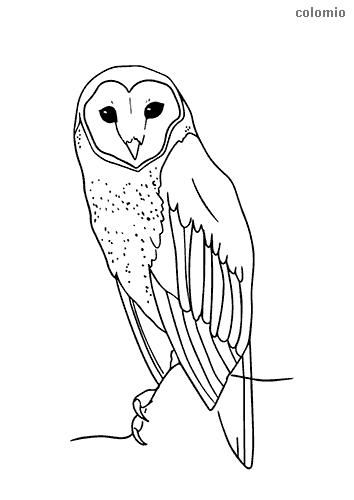 Dibujo de Lechuza sencilla para colorear