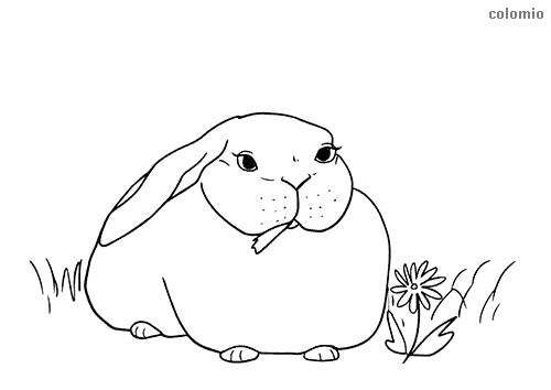 Eating rabbit coloring sheet