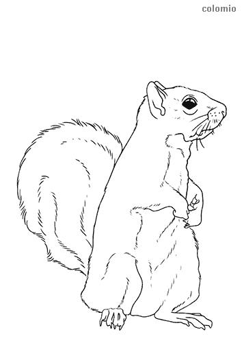Dibujo de Ardilla para colorear