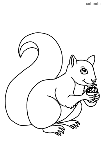 Simple squirrel with nut coloring page