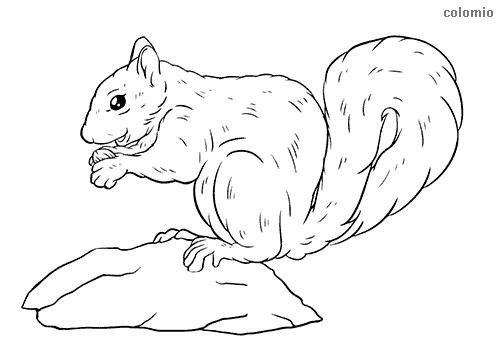 Squirrel on a rock coloring sheet