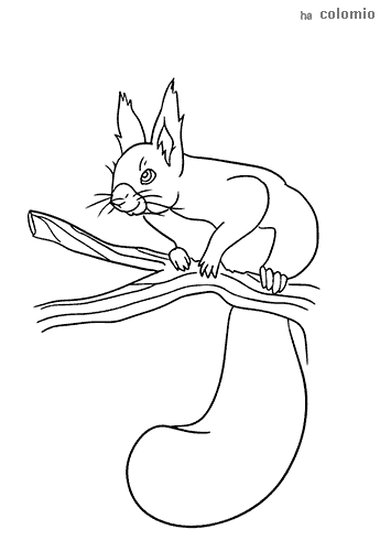 Squirrel on tree trunk coloring sheet