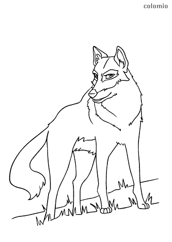 Curious wolf coloring page