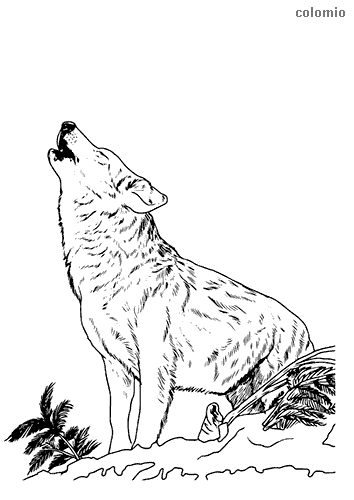 Howling wolf coloring sheet