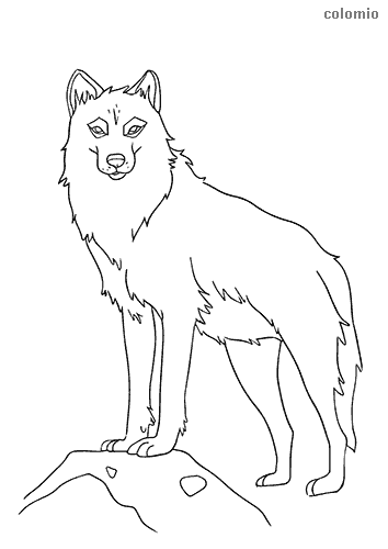 Lonely wolf coloring page