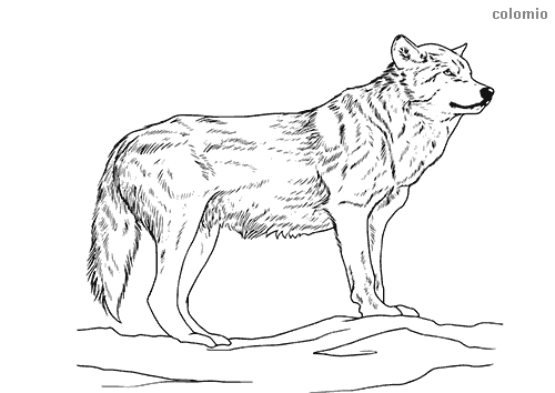 - Wolves Coloring Pages » Free & Printable » Wolf Coloring Sheets