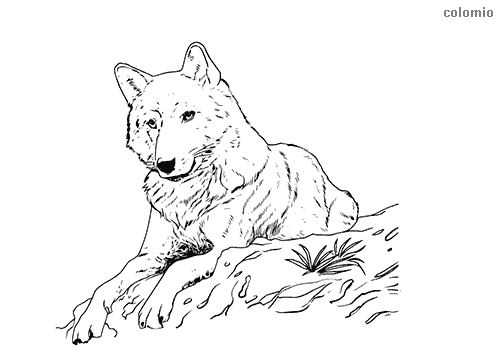 Wolves Coloring Pages » Free & Printable » Wolf Coloring Sheets
