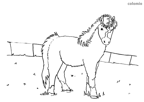 Foal at the fence coloring page