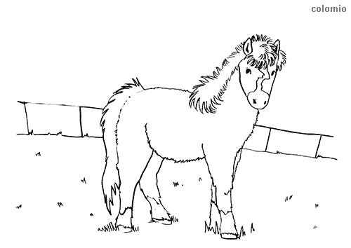 Dibujo de Potro en la cerca para colorear