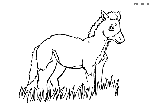 Foal in the grass coloring pages