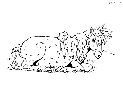 Foal lying down coloring page