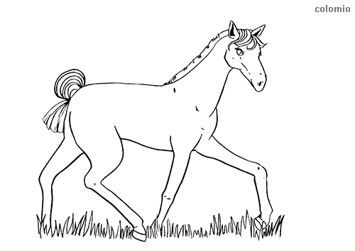 Foal trotting coloring page