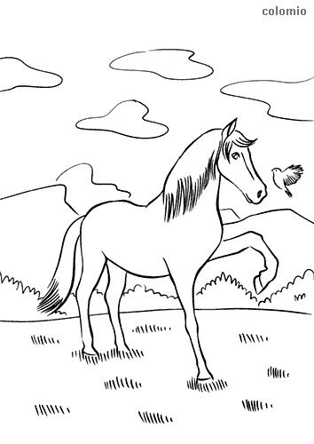 Foal with bird coloring page