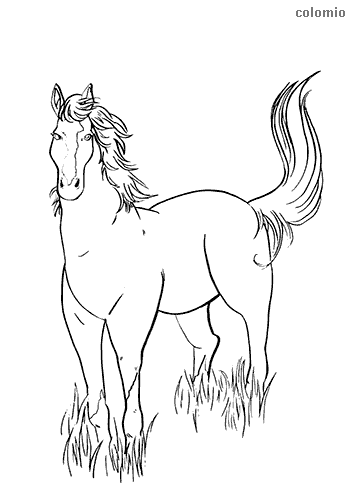 Foal coloring page