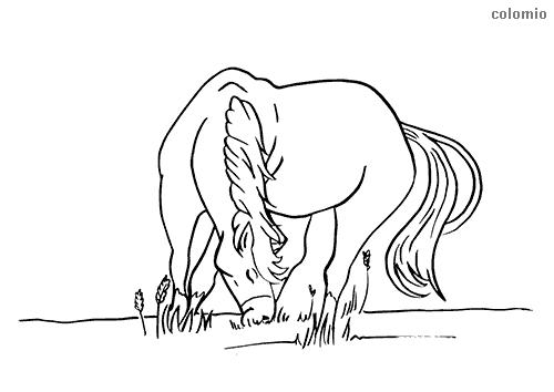 Dibujo de Caballo pastando en la hierba para colorear