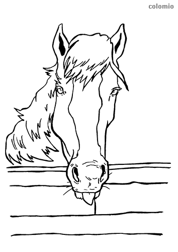 Horse behind a fence coloring page