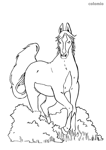 Horse behind bushes coloring page