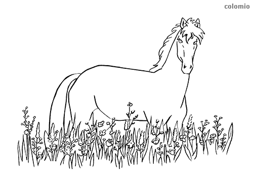 Horse in a meadow coloring page