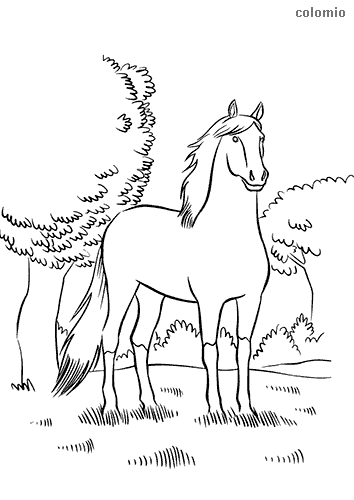 Horse in the forest coloring page