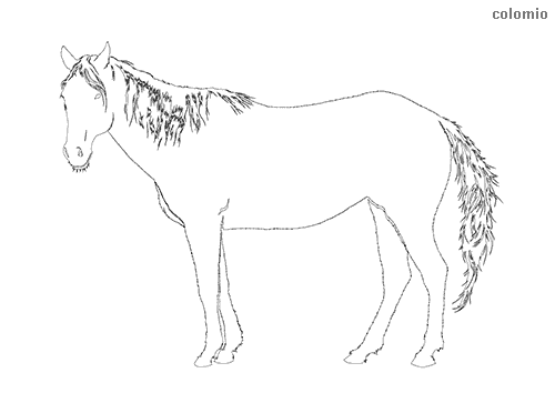 Horse silhouette coloring page