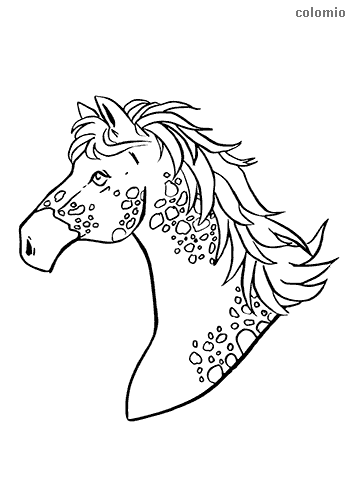 Knabstrup horse head coloring pages
