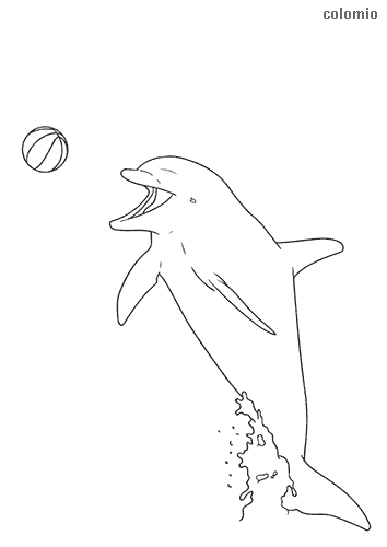 Dolphin with ball coloring page