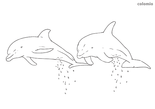 Pair of dolphins coloring page