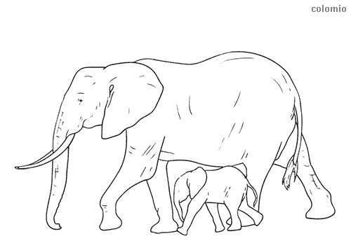 Elephant with baby coloring page