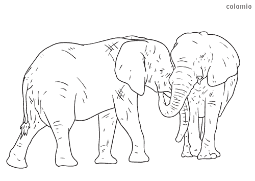 Pair of elephants coloring sheet