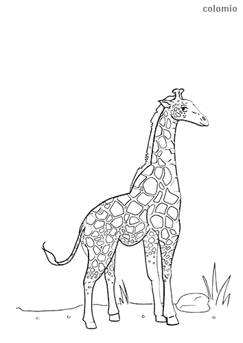Giraffe boy coloring page