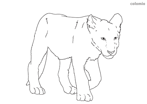 Lion cub coloring sheet