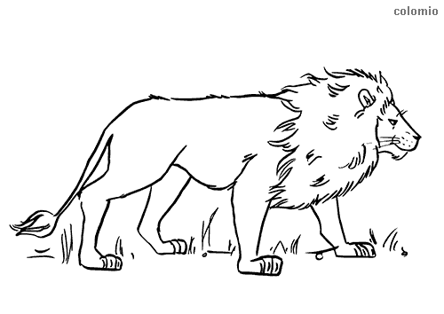 Lurking lion coloring page
