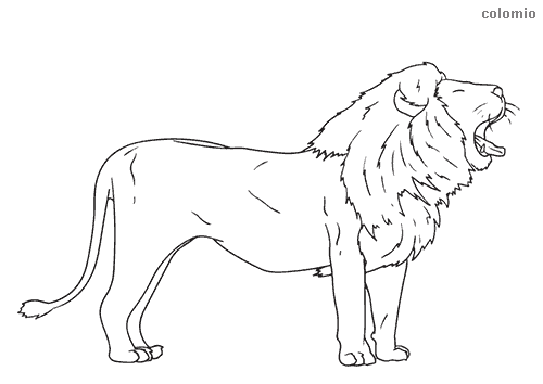 Yawning lion coloring sheet