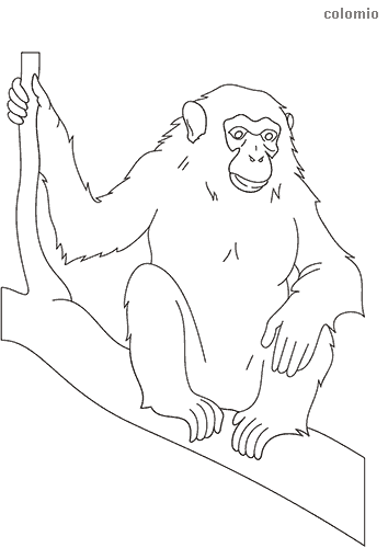 Chimpanzee on tree trunk coloring page
