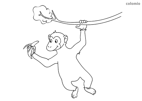 Little monkey with banana coloring page